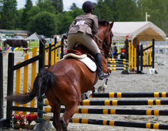 12 Equitation: Horse Errors