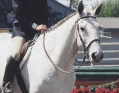 09 Hunters Under Saddle