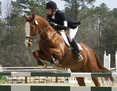 16 Equitation – Tack